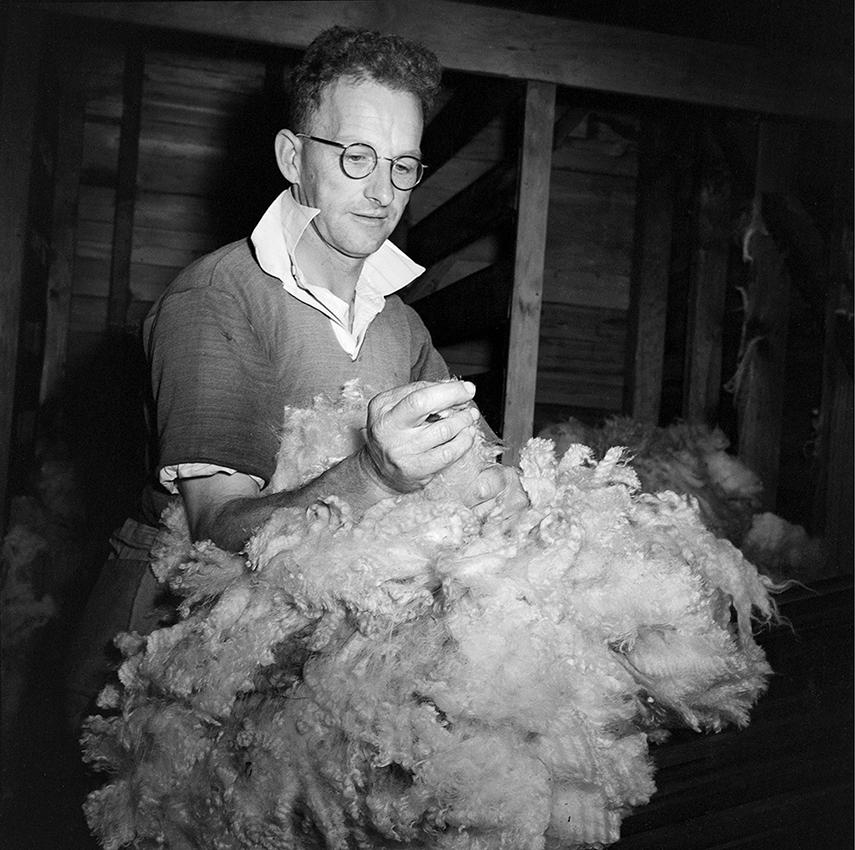 Hec. Dalglish, wool classing